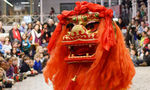 Chinese New Year - Welcome in the Year of the Pig